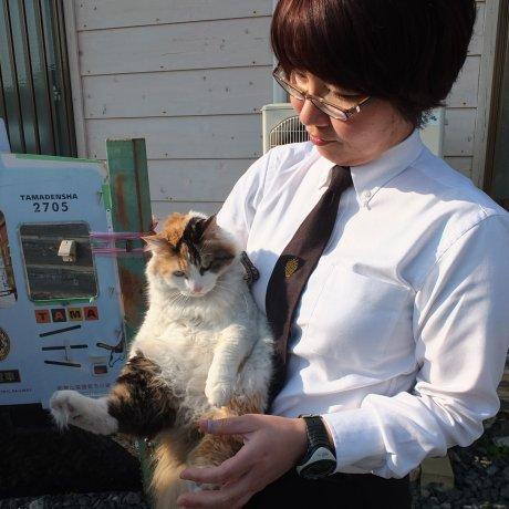 สถานีแมวเหมียว เมืองวากายาม่า