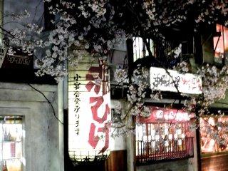 아름다운 벚꽃에 둘러 쌓여 있는 조그만 음식점