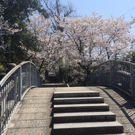 Hanami di Bairin-ji
