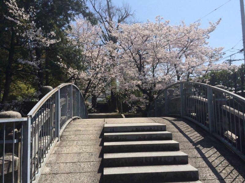 <p>The small bridge at&nbsp;Bairin-ji</p>