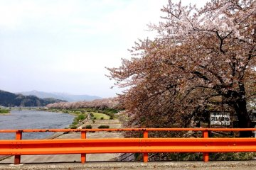 <p>During the Edo period, a number of cherry trees were planted here from Kyoto.</p>
