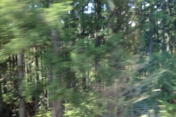 <p>A flash of a forest</p>