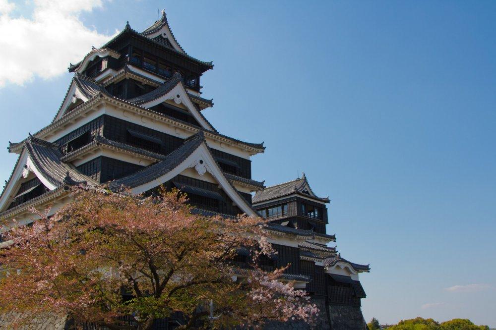 Когда вы думаете о весне в Японии, вам на ум сразу приходит цветущая вишня. Так и есть - напротив двух величественных башен замковой крепости расположилась парочка вишневых деревьев.