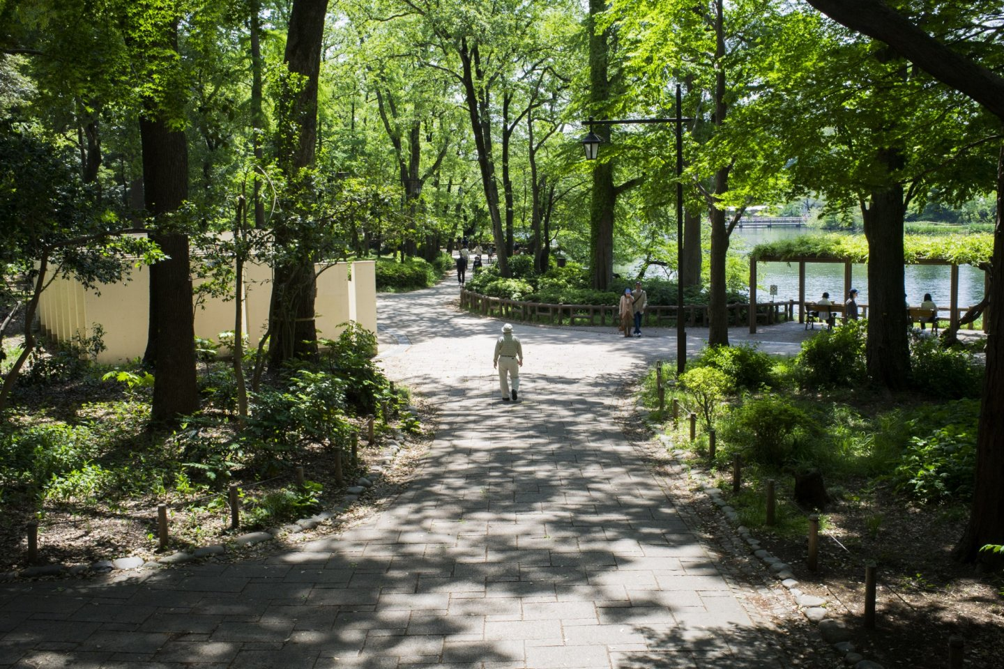 The greenery of Inokashira Park.