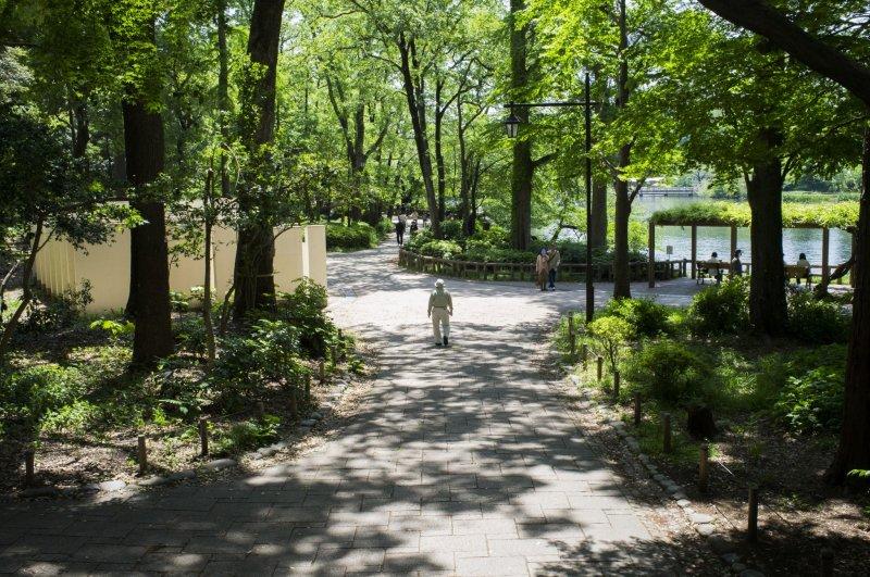 The greenery of Inokashira Park.