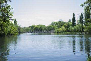 Inokashira Park.