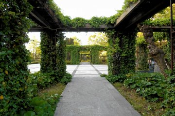 <p>This is the rose garden. Imagine how it looks when all roses are in full bloom!</p>