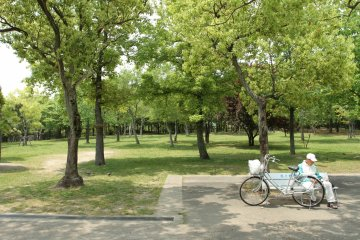 <p>All the trees and greenery</p>