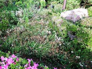 Di atas buit sangat berangin sehingga bunga dan tanaman tersapu hingga ke tanah