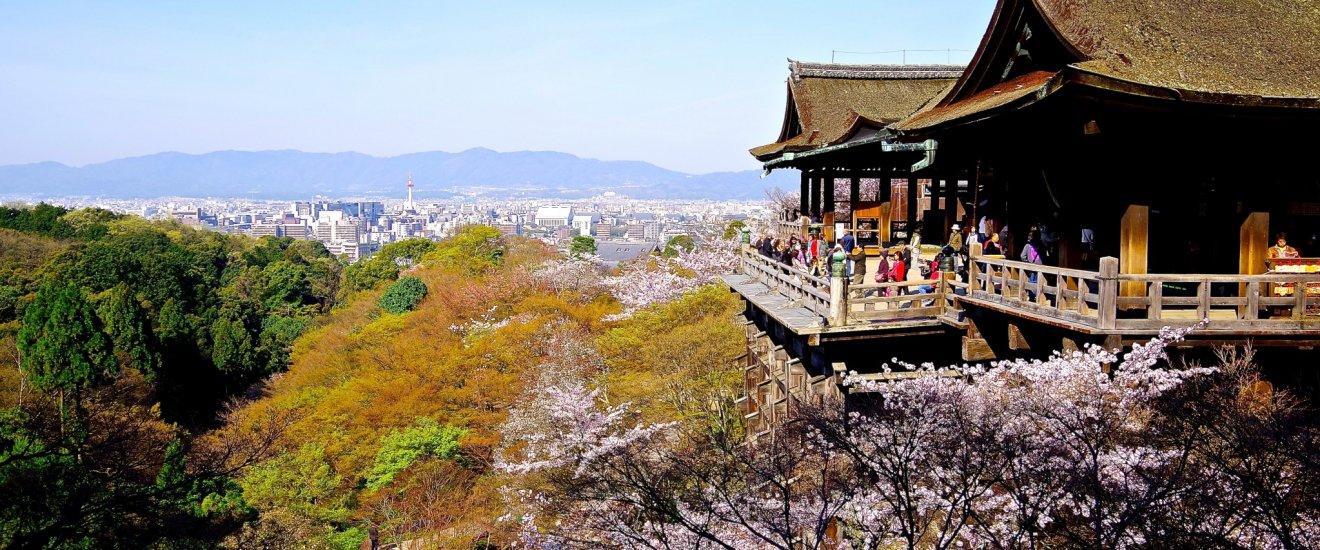 Platform of Kiyomizu-dera surrounded by cherry blossoms