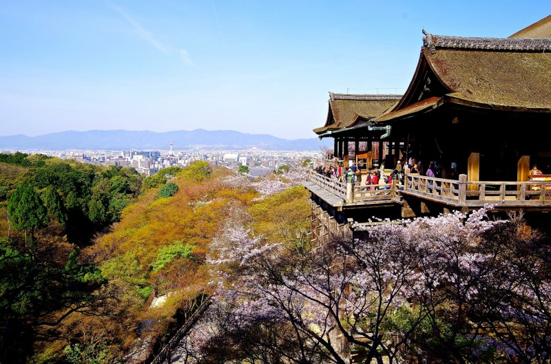<p>Platform of Kiyomizu-dera surrounded by cherry blossoms</p>