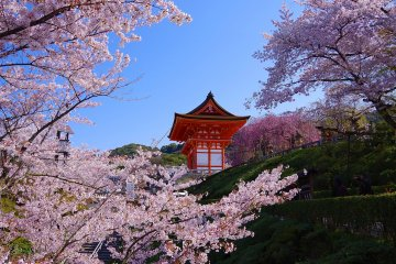 <p>Beautiful cherry blossoms at Kiyomizu-dera</p>