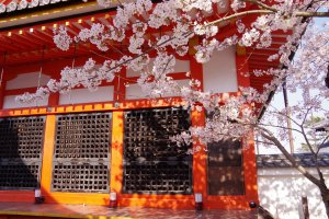 坂上田村麻呂像を祀る田村堂と桜。