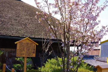 <p>The description on the sign says that this cherry tree is the one in the Noh story of Tamura-maro</p>