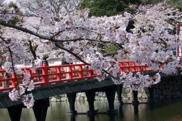 <p>Bridge over moat at Odawara&nbsp;Castle</p>