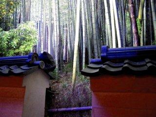 Floresta de bambu para lá do muro