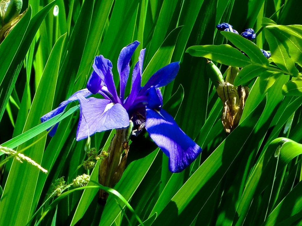 Bela combinação de azul e verde