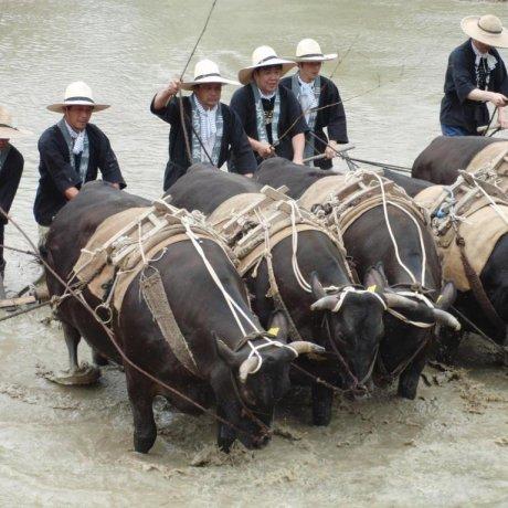 Doronko Matsuri Mud Festival