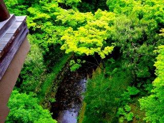 通天橋から緑の谷間を見下ろす