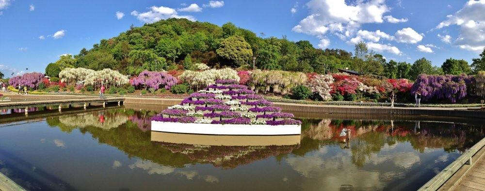 Ashikaga Flower Park is equally beautiful in daylight. You can also enjoy a variety of flowers other than wisteria which it is most famous for. The backdrop of the hills adds further beauty to the scenic location in Tochigi Prefecture. Summers are also a popular time to visit, when the pond is filled with white lilies.