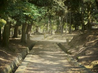 Nara Park has some beautiful, mysterious alleys and the golden light turns them into soft watercolor paintings.