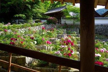 <p>Peony gardens beside roofed passageways to the main hall</p>