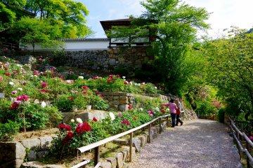 <p>People enjoying peony flowers in May</p>