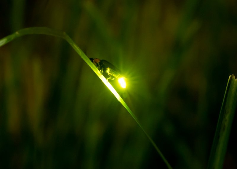 [Image: kyoto-firefly-viewing-in-uji-184835.jpg]