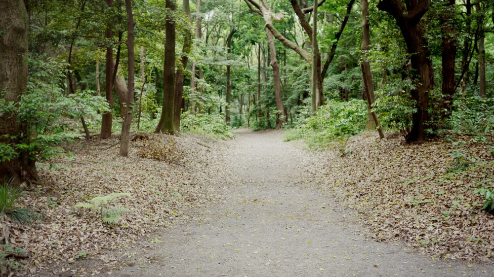 A peaceful path leading to the shrine.