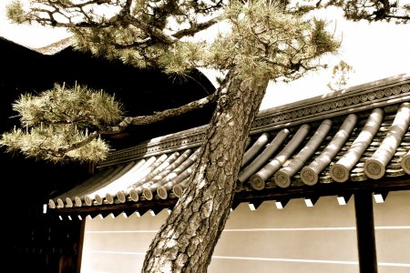 Đền Myoshin-ji và khu phức hợp - 1