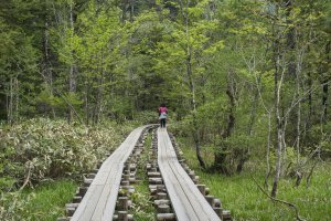 Man-made tracks along the nature trail leading to various sightseeing points in Kamikochi