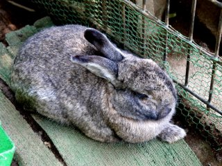 Все кролики спали