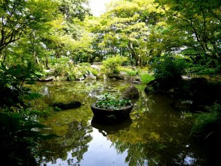A peaceful pond surrounded by mature trees is beautiful in every season