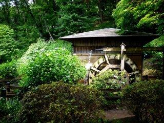 Une petite maison de moulin se dresse près des étangs d'iris