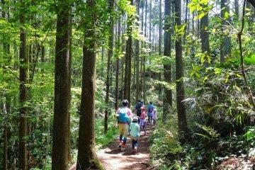 เพลิดเพลินกับการเดินป่าที่คามาคุระ