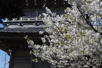 <p>Komyo-ji is alive with local people and it keeps its door open to anyone who needs a breath of fresh air.</p>