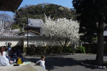 <p>I always feel Komyo-ji is full of life. The reason is that I see many local people and only a few tourists here: A group of mothers chatting, kids running around,...</p>
