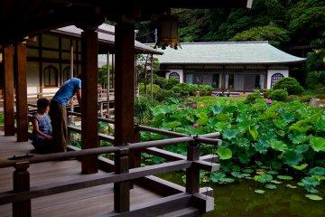 <p>Lotus in Komyo-ji Temple in summer</p>