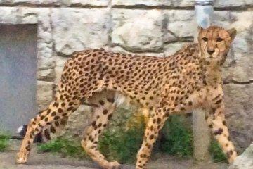 Going Wild at Tama Zoo