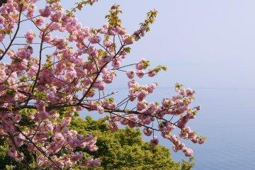 <p>Peach blossoms</p>