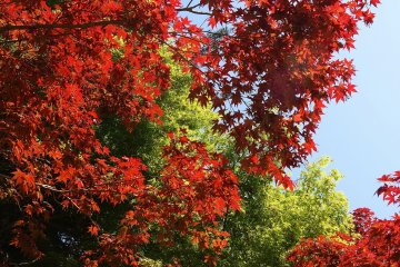 <p>colourful leaves in all seasons</p>