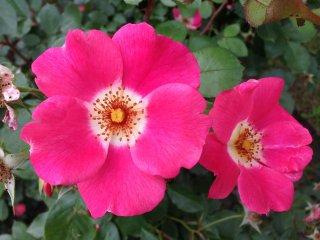 Thật khó có thể chọn được bông hoa đẹp nhất ở đây!