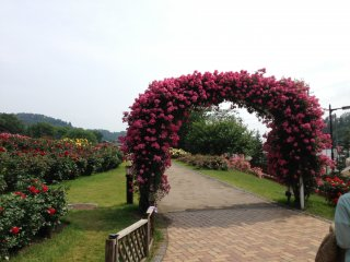 What would a Rose Festival be without an arch full of roses?