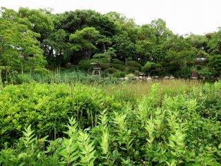 漏水のせいかこの池、まるで雑草天国だ!