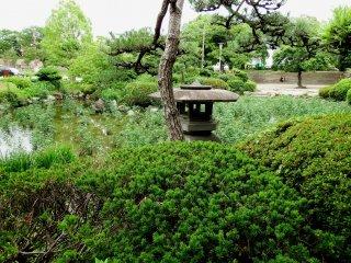 Cây thông Nhật Bản và đèn lồng bằng đá