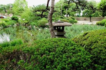 <p>Japanese pine tree and stone lantern &nbsp;</p>