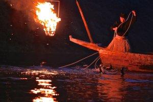 ...ชาวประมงผู้เชี่ยวชาญ ควบคุมนกกาในการจับปลาอย่างคล่องแคล่ว...