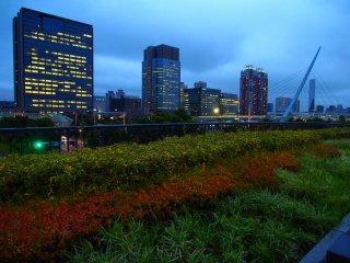 Odaiba transitions towards autumn