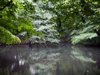 Sebuah kolam kecil terletak di tengah taman