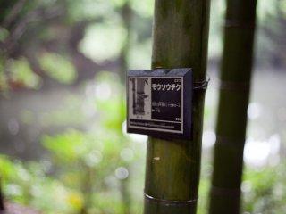 Satu dari banyak tanda di seluruh taman dengan lebel tanaman yang berbeda